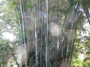 エレメンタル達は竹も好き!