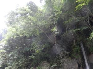滝のオーブたち